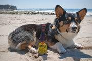 Ranger at beach