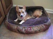 Pippa - my new rescue