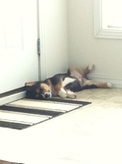 I think I will take a little nap while I guard the door...