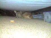 Hiding after my bath