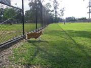 the dog park!