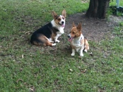 Cash and Pippa.2