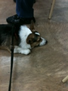 Tired at Obedience Class