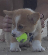 Ein comes home... and then to the beach