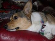 dogsfall2011 023