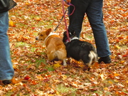 Bunny butts in fall foliage
