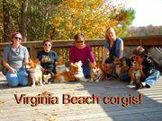 VA Beach Corgi meet in Chesapeake