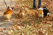 4 bunny butts and Ein takes a breather