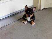 Puppy life 2011