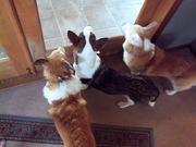 three good watch dogs