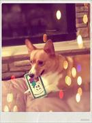 Enjoying his rawhide Christmas card