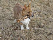 Lucy 10 months with stick