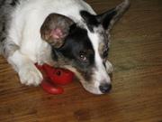 Lulu sleeping on her new toy