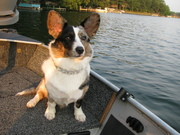 Now I am officially a fishing dog!