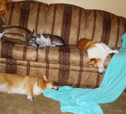 herky, mia, and duke passed out...