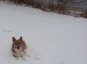 Lucy Dec 2012 Snow Frolic