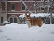 Dec 27 snow Lucy Coit Courtyard