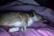 Bed sleeper