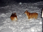 Mia and Herky Love the Snow