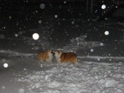 Mia and Herky Playing in the Snow