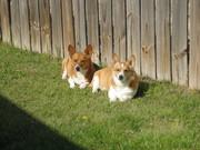 my furbabies enjoying warm TX sunshine