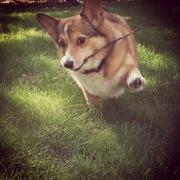 Marley Springtime Fetch