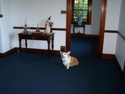 Oscar on the newly laid carpet in the formal sitting room @ Langi Dorn