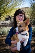 Arizona Corgi Meet