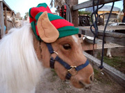 Bodie the Elf