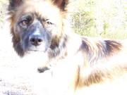 my dog chloe