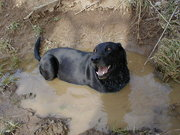 Kiah this morning in the mud...