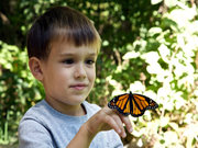 butterfly-9-Beautiful-Free-Pictures