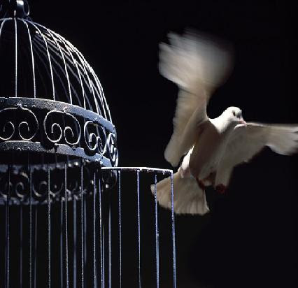Bird out of cage..