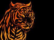 tigeronfire