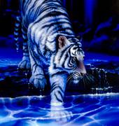 White Spirit Tiger (Account)