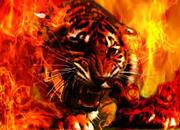 tigeronfire2