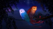 Sun and Moon Owls Desktop