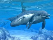 delfinibelli