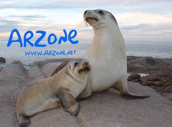 ARZone SL