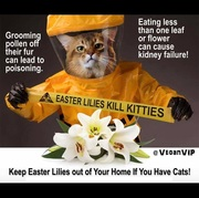 Easter Kills cats! Be Aware