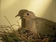 Nature, doves, & Boo
