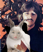Ringo Found Himself A New Pet HAHAHAHHAA