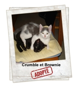 Crumble et Brownie