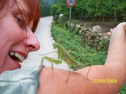 My friend,  Ming the Mantis :)