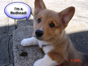 I love Redheads!