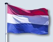 Dutch Corgi's