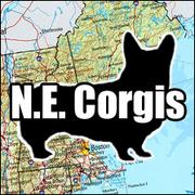 New England Corgis