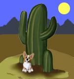 Arizona Corgis!