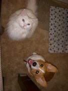 My cat N' Corgi R' best …
