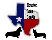 Houston Texas Area Corgis